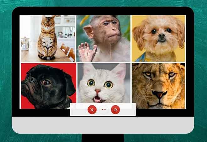 2 способа включить просмотр сетки в Google Meet на ПК и мобильных устройствах
