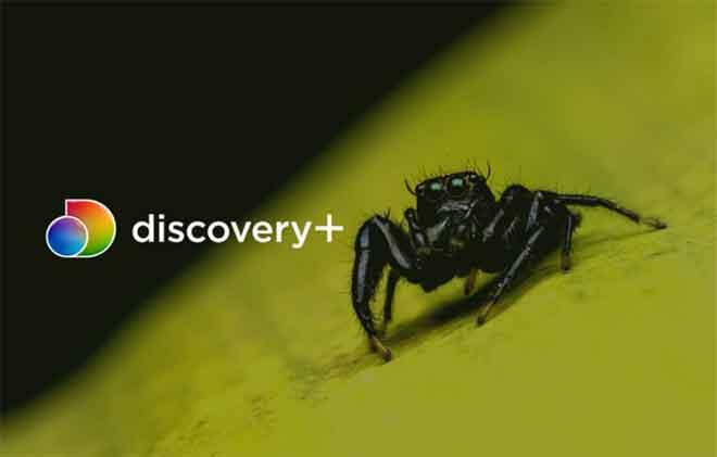 Как смотреть Discovery + на iPhone, iPad и Android