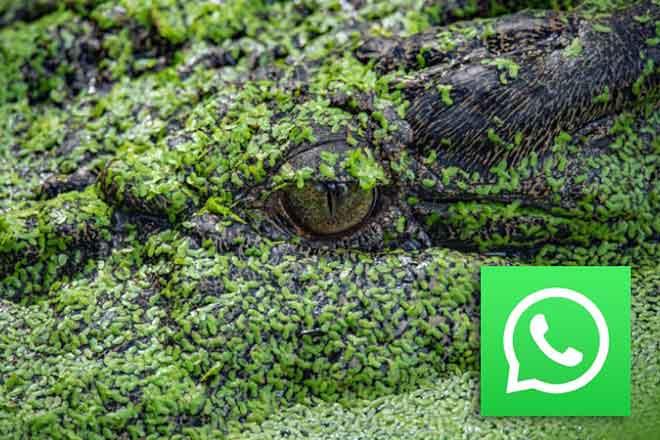 Как тайно читать сообщения WhatsApp